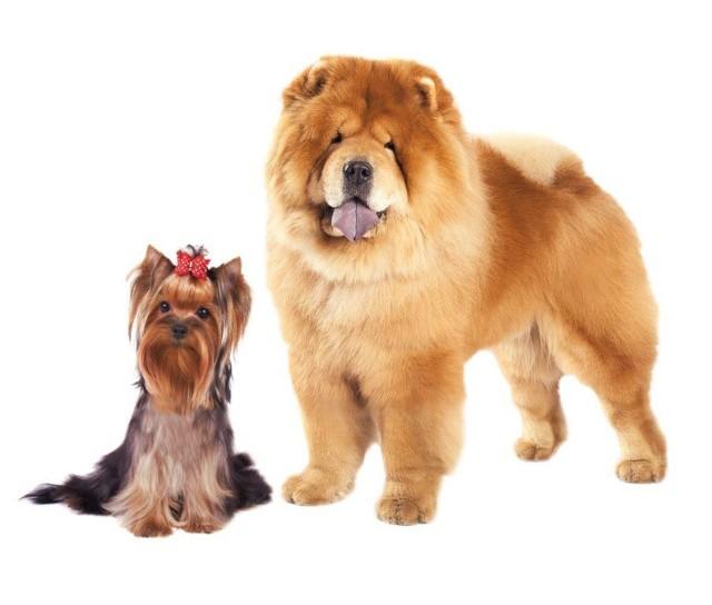 Cuprum Arena: Psie gwiazdy opanują Lubin