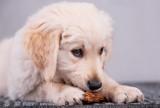 Niezwykłe zdjęcia psiego fotografa ZDJĘCIA