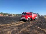 Tak wygląda teren po wielkim pożarze w okolicach Krosna Odrzańskiego (ZDJĘCIA)