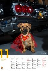 Komu w drogę, temu pies. Niezwykły kalendarz z fotografiami psów [ZDJĘCIA]