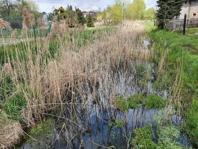 Wody Polskie podejmą się konserwacji rzeki Leśnicy