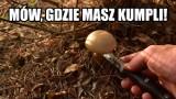 Najlepsze MEMY o zbieraniu grzybów! MEMY o grzybiarzach i o grzybach! Czas na grzyby! Tak Internet śmieje się z grzybobrania 25.07.2021