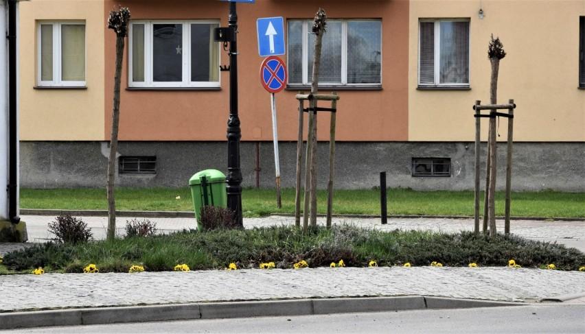 Zbąszyń: Na pewno każdy dostrzegł, że w mieście zrobiło się wiosennie [Zdjęcia - 13.04.2021]