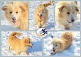 Zaadoptuj psa z lubelskiego schroniska. Zwierzaki czekają na nowy dom, cz. III (ZDJĘCIA)