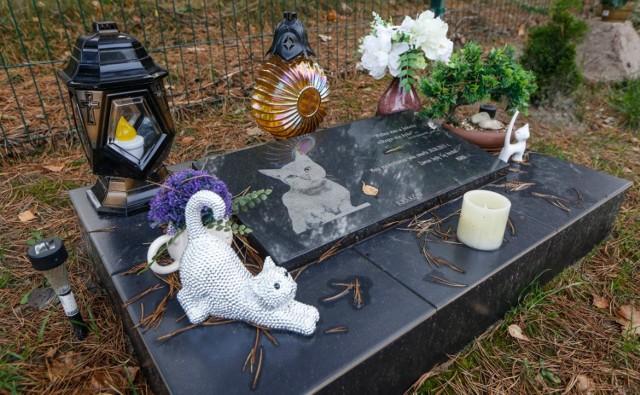 Groby zwierząt robią imponujące wrażenie. Te znajdują się m.in. w Kątach Wrocławskich, Toruniu, Bydgoszczy, Łodzi i Rakszawie