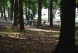 Park Kopernika zarasta, a służby sprzątające omijają?
