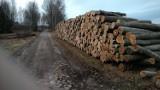 """Kilkaset starych drzew wycięto w rezerwacie """"Lisia Kępa"""" koło Bytowa"""