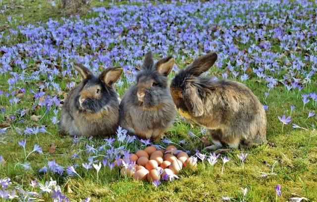 Krótkie życzenia Na Wielkanoc Wierszyki życzenia Na Sms