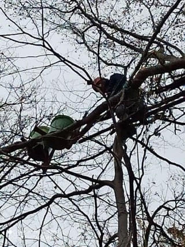 Kubły na drzewach na Wzgórzu Gedymina. Kto i po co je tam powiesił?