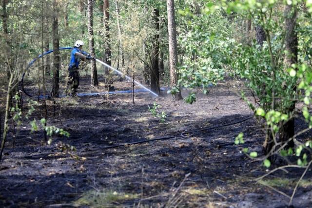 Walki z ogniem w obu przypadkach nie ułatwia susza.