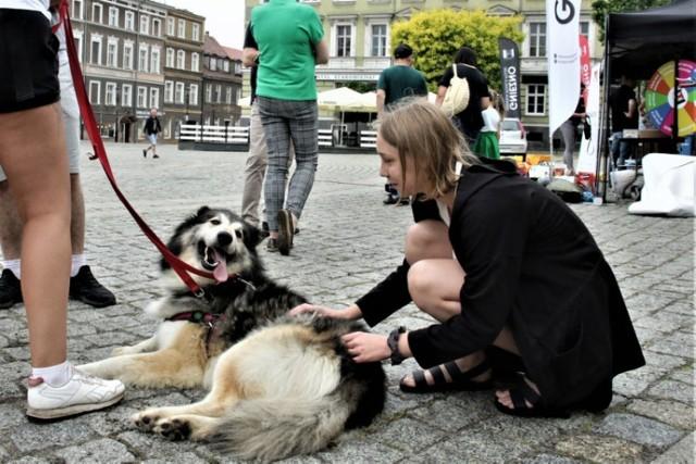 Gnieźnieńskie Dni Recyklingu i zbiórka dla zwierząt ze schroniska