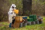 Żnin. Dotacje dla pszczelarzy. Wnioski można składać w biurze powiatowym ARMiR w Żninie