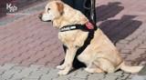 Opole. Pies Graffi tropiący narkotyki odszedł ze służby w Krajowej Administracji Skarbowej na emeryturę