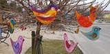 Chełm. Wiosenne ptaki cudaki przysiadły na gałęziach drzew przed Chełmskim Domem Kultury. Zobacz zdjęcia