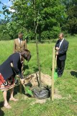 W parku-arboretum posadzono lipę z okazji Jubileuszu 125-lecia Ordynacji Gołuchowskiej [FOTO]