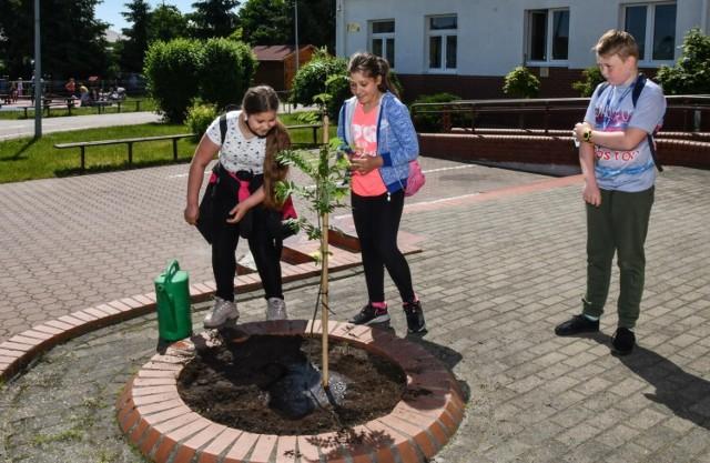- W sumie w tej akcji  uczestniczyć będzie około 500 uczniów - mówi Mirosław Donarski, dyrektor SP im. Jana Pawła II w Łochowie. - Przygotowaliśmy plakaty, umieściliśmy informację na naszej stronie internetowej, wysłaliśmy też informację do rodziców, którzy także mogą się włączyć w sprzątanie lasu. To wydarzenie chcemy już na stałe wpisać do planu pracy szkoły na przyszłe lata. Zawsze odbywałoby się w czerwcu pod koniec roku szkolnego.