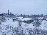 Zimowe zdjęcia z ogródków działkowych w Hermanowie