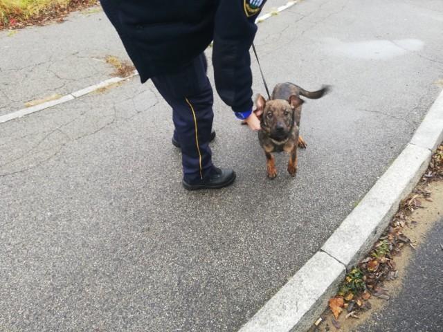 Porzucony pies został znaleziony na Velostradzie w Jaworznie