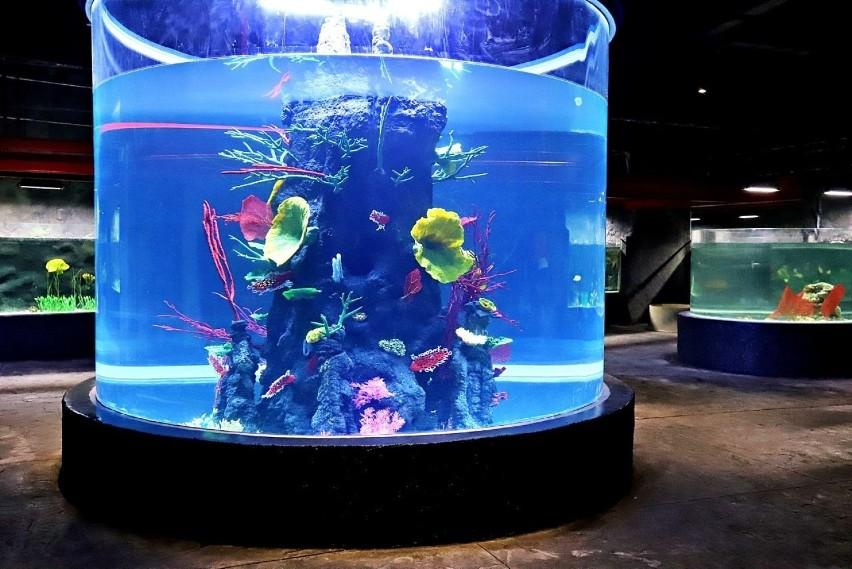 W Orientarium w łódzkim zoo trwają już prace wykończeniowe....