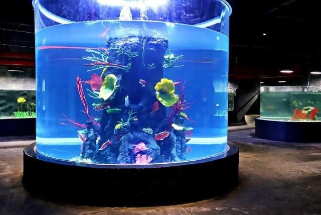 W Orientarium w łódzkim zoo trwają już prace wykończeniowe. Basen dla rekinów i podwodny tunel zostały już zalane wodą, trwa badanie wytrzymałości ścian. Wiosną do kompleksu mają wprowadzać się zwierzęta. Otwarcie Orientarium ma nastąpić po wakacjach.  CZYTAJ DALEJ >>>  .