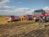 Kilkanaście zastępów strażaków gasiło pożar zboża na pniu i ścierniska w Koślince