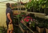 Ekologiczny weekend w Krakowie. Można otrzymać sadzonki roślin [ZDJĘCIA]