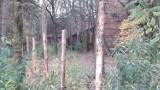 Mury lubińskiej Strzelnicy runą? Czy przyszłość parku Militarnego jest zagrożona?