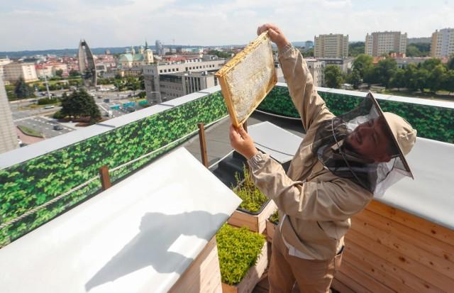 Rzeszowskie Miodobranie. Podczas dwudniowego wydarzenia w Galerii Rzeszów był kiermasz wyrobów pszczelich. A najważniejszym punktem programu było pozyskanie miodu z pasieki, która mieści się na dachu Galerii Rzeszów