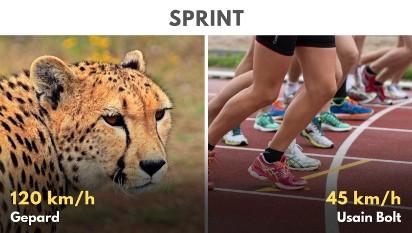 Rekordziści wśród zwierząt - w tych konkurencjach biją człowieka na głowę