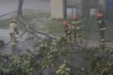 Gwałtowna nawałnica nad Zduńską Wolą. Piorun powalił drzewo ZDJĘCIA