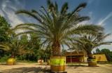 Palmy zamiast na rynku są na terenie oczyszczalni ścieków w Panewnikach. Transport roślin jest niemożliwy