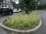 Zakopane. Pod Giewontem wyrosły kolorowe i ekologiczne skwery z kwiatami i owadami. Pomagają oczyszczać powietrze