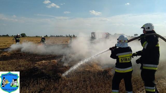 Pożar na polu w Trzebczu Szlacheckim gasiło aż dziesięć zastępów strażaków