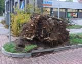 Orkan Ksawery w Bytomiu narobił mnóstwo szkód