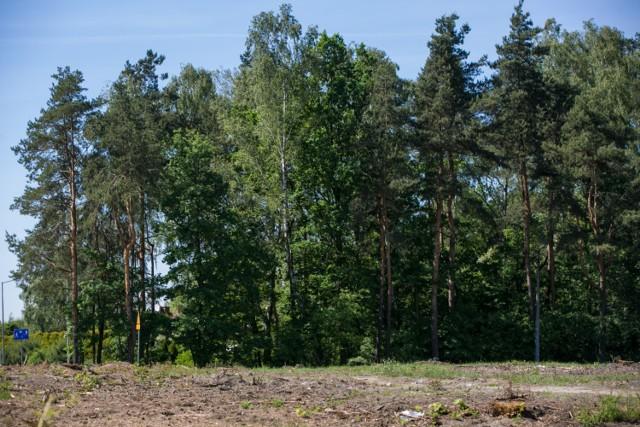 W ciągu dwóch dekad Kraków ma podwoić liczbę leśnych obszarów