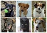 Te psy i koty ze schroniska w Bydgoszczy czekają na swoich człowieków! Zobacz zdjęcia uroczych zwierzaków!