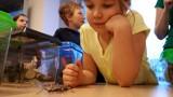 ZIELONA GÓRA: Maluchy pokochały patyczaki i zbudowały dla nich domki [ZDJĘCIA, WIDEO]