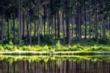 Oto najbardziej lubiane parki krajobrazowe w Polsce! Jeden z nich znajduje się na Pomorzu [TOP 10]