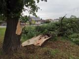 Połamane drzewa i konary w całym powiecie - nawałnice przechodzą nad Powiślem
