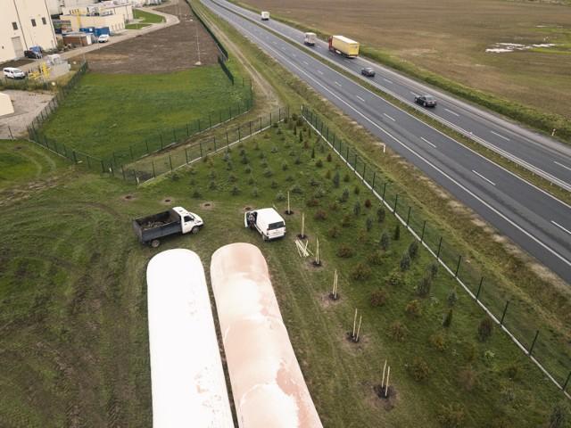 Bioagra w Goświnowicach prowadzi akcję nasadzeń drzew.