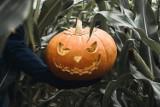 """Te rośliny budzą grozę! Zobacz """"straszne"""" rośliny na Halloween. Wyglądają jak z horroru"""