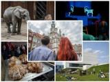 Atrakcje Poznań: Co zobaczyć w stolicy Wielkopolski? Jakie są atrakcje turystyczne i ciekawe miejsca w Poznaniu?