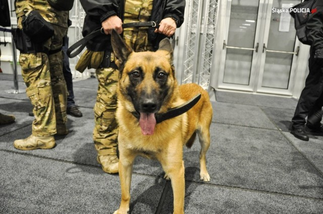 Policja wraz z psami, które są specjalnie wyszkolone do wykrywania materiałów wybuchowych przyjechała na teren COP 24 w Katowicach, by sprawdzić czy miejsce to jest bezpieczne. Sprawdzano pawilony tymczasowe, pomieszczenia w Spodku oraz w Międzynarodowym Centrum Kongresowym.