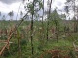 Nawałnica w Borach Tucholskich. Wichura spowodowała wiele szkód, Lasy Państwowe ostrzegają [zdjęcia]