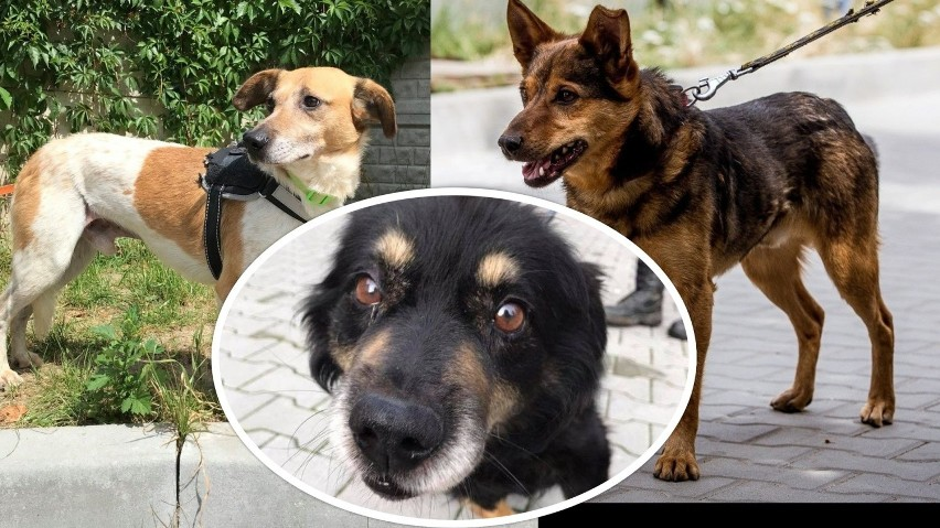 Pieski ze schroniska w Dyminach czekają na swoich nowych...