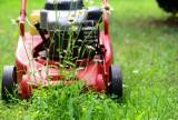Powierzchnia wykoszonych trawników w Malborku to 230 boisk w jeden sezon. A koszt?