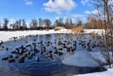 Słoneczna i mroźna zima w Oleśnicy. Zobacz zdjęcia naszego reportera
