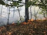 Zamknięte lasy na Mazowszu. W tych miejscowościach obowiązuje zakaz wstępu do lasu. Trwa najwyższy stopień zagrożenia pożarowego