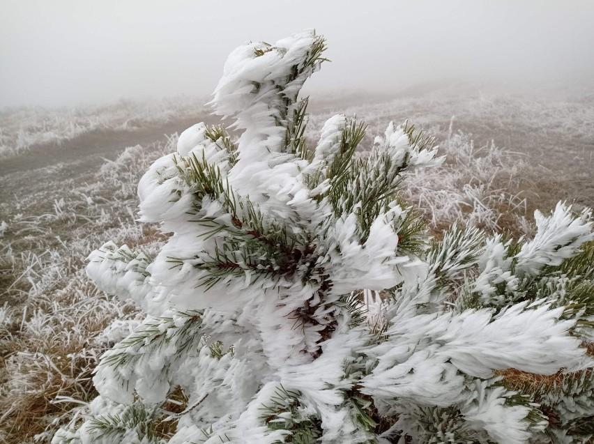 Mroźne arcydzieła natury. Muszyna zimą zachwyca [ZDJĘCIA]