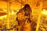 Ogromna plantacja marihuany zlikwidowana. Rosło na niej ponad 1100 krzewów konopi, o uprawę których podejrzewa się dwóch 30-latków [ZDJĘCIA]